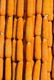 Gelber Mais verziert Stockfotos