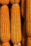 Gelber Mais verziert Lizenzfreie Stockbilder