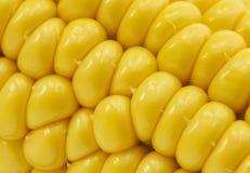 gelber Maishintergrund, Erntezeit, gesunde organische Nahrung, Maiskolben, goldene strukturierte Tapete lizenzfreie stockfotos