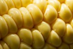 Gelber Maishintergrund, Erntezeit, gesunde organische Nahrung, Maiskolben, goldene strukturierte Tapete lizenzfreie stockbilder