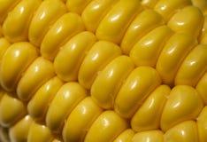 Gelber Maishintergrund, Erntezeit, gesunde organische Nahrung, Maiskolben, goldene strukturierte Tapete stockbild