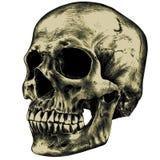Gelber menschlicher Schädel Stockfotografie