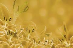 Gelber mit Blumenhintergrund Lilienblumen auf einem unscharfen bokeh Hintergrund Tulpen und Winde auf einem weißen Hintergrund Stockfoto