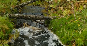 Gelber Nebenfluss Herbstwald stock footage