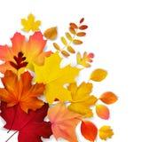 gelber, orange, roter Herbstlaub vektor abbildung