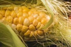 Gelber organischer Mais Colorados erntete gerade stockfotografie