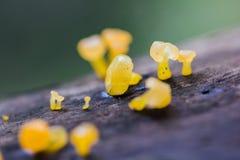 Gelber Pilz auf trockenem Holz im Wald lizenzfreie stockbilder