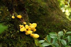 Gelber Pilz in einem Garten von Kanazawa, Japan Stockbild