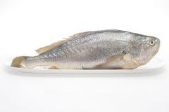 Gelber Quakfisch Lizenzfreies Stockfoto
