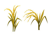 Gelber Reisgegenstand Stockfotos