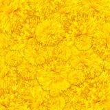 Gelber Ringelblumenblumengebrauch als Hintergrund Lizenzfreies Stockfoto