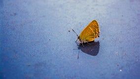 Gelber Schmetterling auf einem grauen Hintergrund stockfoto