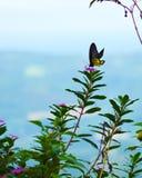Gelber Schmetterling, der an einem sonnigen Tag einzieht stockfoto