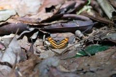Gelber Schmetterlingsmineralleckstein Stockbild