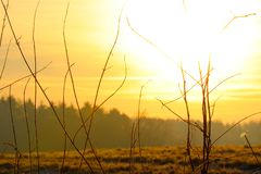 Gelber Sonnenaufgang auf der Wiese Lizenzfreie Stockbilder