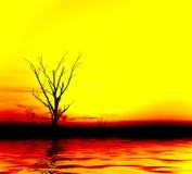 Gelber Sonnenuntergang. Einsamer Baum Lizenzfreie Stockfotos