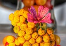 Gelber Specie und Blumen Stockfoto