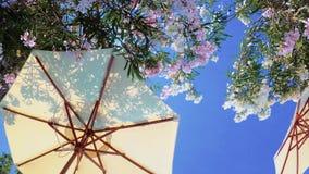 Gelber Strandsonnenschirm mit geblühtem Blumenbaum stock video