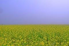Gelber träumerischer Morgen Stockfotografie