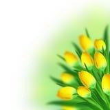 Tullips Blumenstrauß Stockfoto