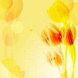 Gelber Tulpehintergrund Stockbilder