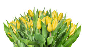 Gelber Tulpenblumenstrauß, lokalisiert auf Weiß Stockbilder