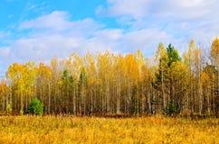 Gelber und blauer Himmel des Waldherbstes Lizenzfreies Stockbild