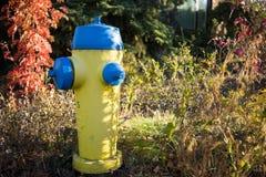 Gelber und blauer Hydrant Stockbilder