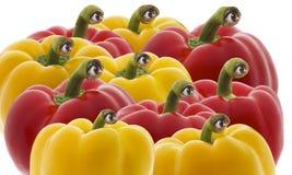 Gelber und roter grüner Pfeffer Stockbild