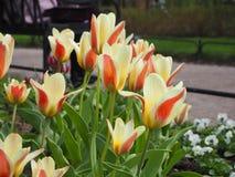 Gelber und roter Tulpengarten lizenzfreie stockbilder