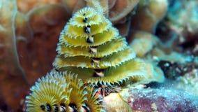 Gelber Unterwasserweihnachtsbaum Stockfotos