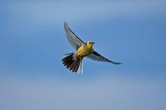 Gelber Vogel auf dem blauen Himmel Lizenzfreies Stockfoto