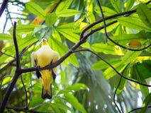 Gelber Vogel auf Stamm Stockfoto