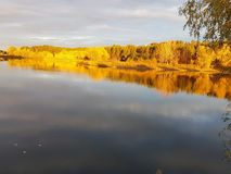 Gelber Wald im Herbst stockfoto