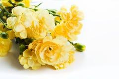 Gelber weicher Frühling blüht Blumenstrauß auf weißem Hintergrund Stockbild