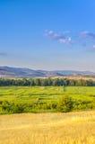Gelber Weizen und grünes Reis-Feld stockbilder