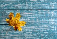Gelbes Ahornblatt auf einem Hintergrund des alten Holzes Stockbilder