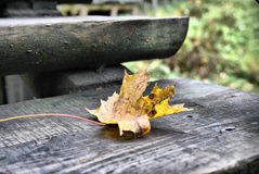 Gelbes Ahornblatt auf grauen hölzernen Schritten Stockfotografie