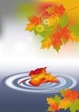 Gelbes Ahornblatt in einer Pfütze des Wassers und Sonneneruption im Herbst Lizenzfreie Stockfotos
