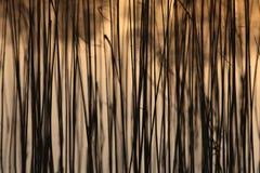 Gelbes Binsenmuster, das auf einem See bokeh Hintergrund textur wächst Stockfotografie