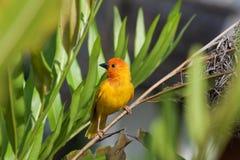 Gelbes Birdei mit grünem Hintergrund Stockbilder