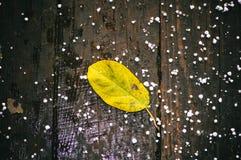 Gelbes Blatt Stockbilder
