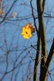 Gelbes Blatt auf dem Baum Lizenzfreie Stockfotografie