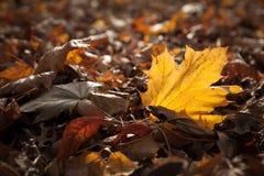 Gelbes Blatt auf dem Waldboden Stockfoto