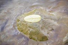 Gelbes Blatt auf den Steinen Stockbilder