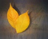 Gelbes Blatt auf einem rostigen Hintergrund Lizenzfreies Stockfoto