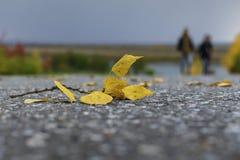 Gelbes Blatt auf einer grauen Asphaltstraße lizenzfreie stockbilder