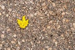 Gelbes Blatt auf grauem Asphalt Lizenzfreie Stockfotos