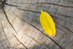 Gelbes Blatt auf hölzernem Hintergrund Lizenzfreie Stockbilder
