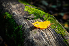 Gelbes Blatt auf Klotz Stockfotos